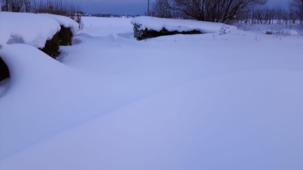 Snö. Snödrivor. Infart. Buxbomshäckar.